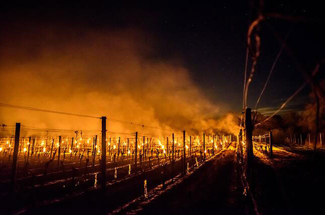 China vineyards antifrost candles manufacturer, against frost candles